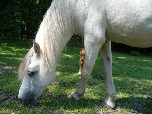001-pony